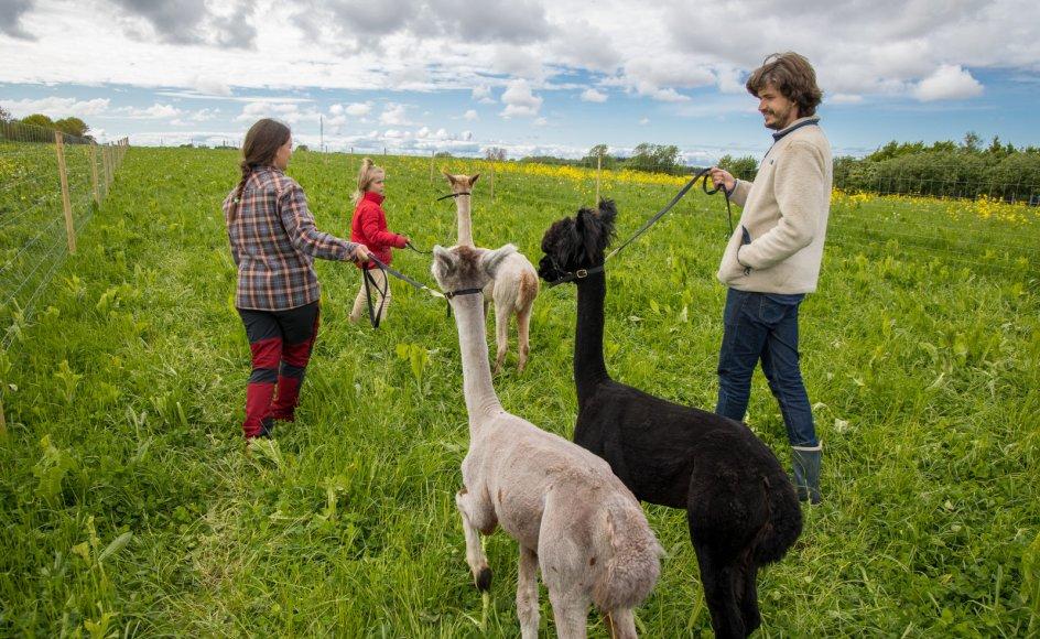 """Maja Kielberg og hendes familie er flyttet fra København og har fundet roen på landet, hvor de blandt andet har fået lamaer, som hun altid har drømt om. """"Sådan nogle har jeg drømt om at få, siden jeg som ung rejste rundt i Sydamerika. Nu er de på en eller anden måde blevet symbolet på det liv, jeg drømte om, at vi skulle have herude,"""" siger hun."""